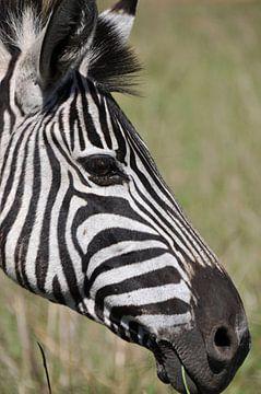 Profiel foto zebra van Peter Mooij