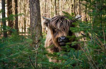 Haal de beestjes in huis :-) van Henk v Hoek