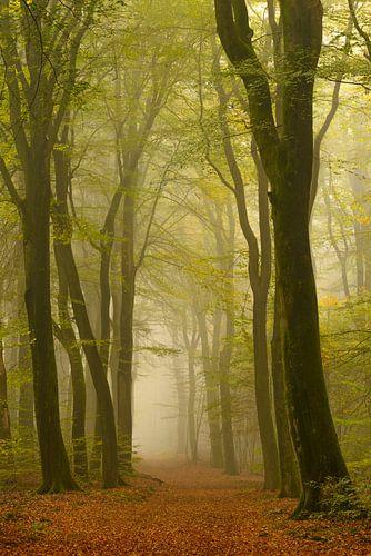Bospad in de mist