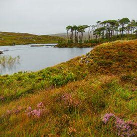 Ireland - Galway - Connemara - Pine Island von Meleah Fotografie