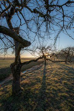 Mooie grillige fruitbomen van Moetwil en van Dijk - Fotografie