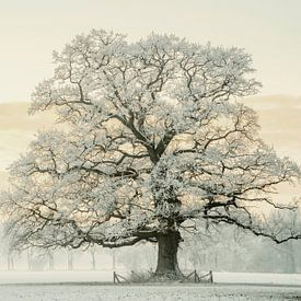 Chêne d'hiver sur Lars van de Goor