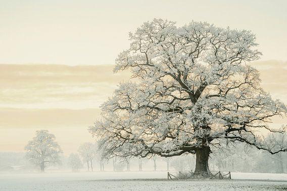 Winter Eik
