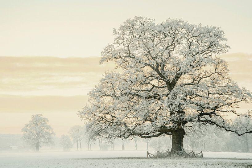 Wintereiche im Reifkleid von Lars van de Goor