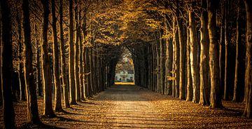 Oprijlaan met bomen naar landhuis van Gerco Stokvis
