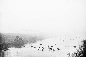 Eenden in de mist 2 van Jacqueline Koster