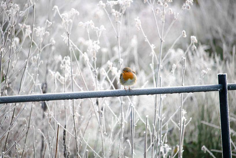Kontrast Winter von Blanchette van Hooren