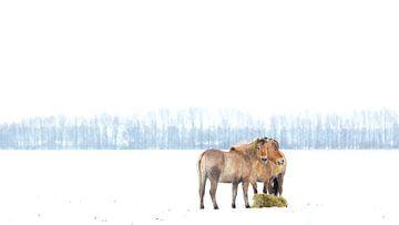 Winter Wonderland van Michel de Koning