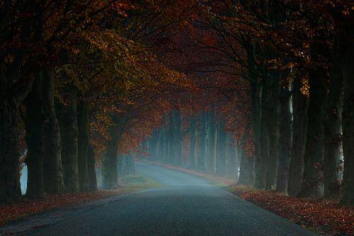 Misty Road von Martin Podt