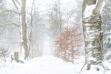 Sprookjes winterwereld van Cocky Anderson