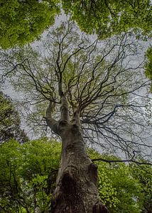 Tree of life van