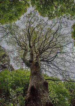 Tree of life van Richard Reuser