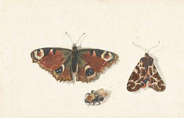 Schmetterling, Motte und Hummel von Johannes Bronkhorst, um 1700