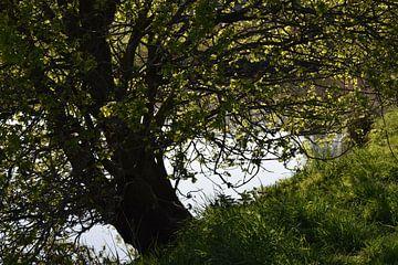 Foto van een boom hangend boven water van een rivier van Breezy Photography and Design