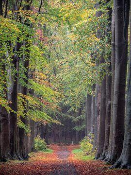 die Gasse im Wald von Henri van Rheenen
