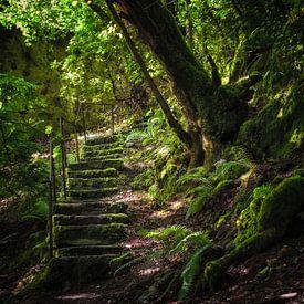 Die geheime Treppe von Pascal Raymond Dorland