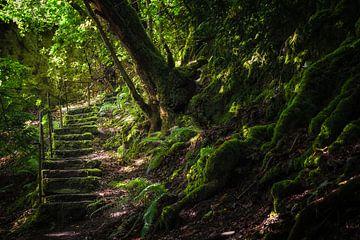De geheime trap van Pascal Raymond Dorland