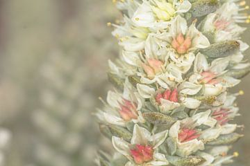 bloem op vetplant von marco voorwinden