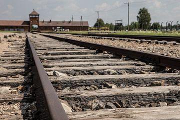 treinrails naar de poort van Auswitz-Birkenau van Eric van Nieuwland