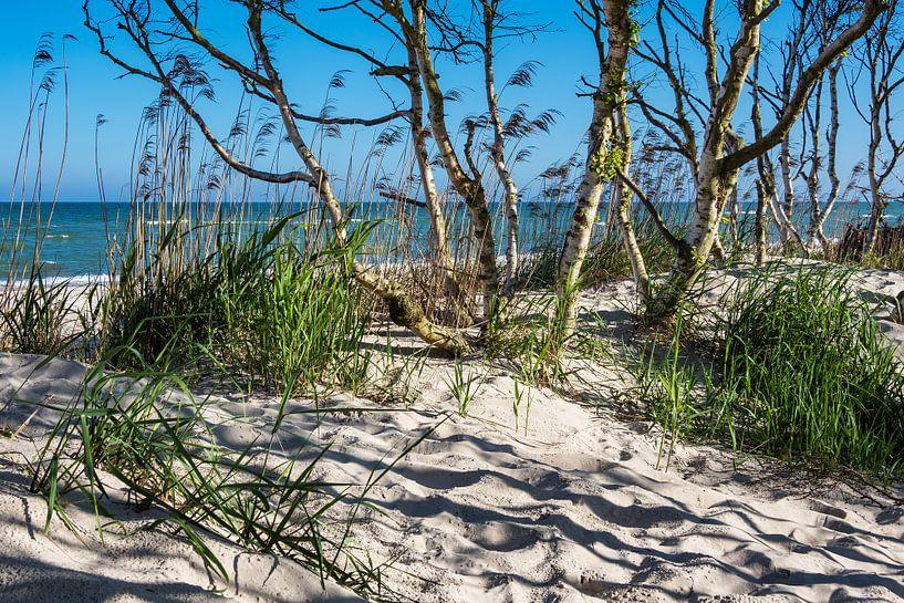 Trees on the Baltic Sea coast van Rico Ködder