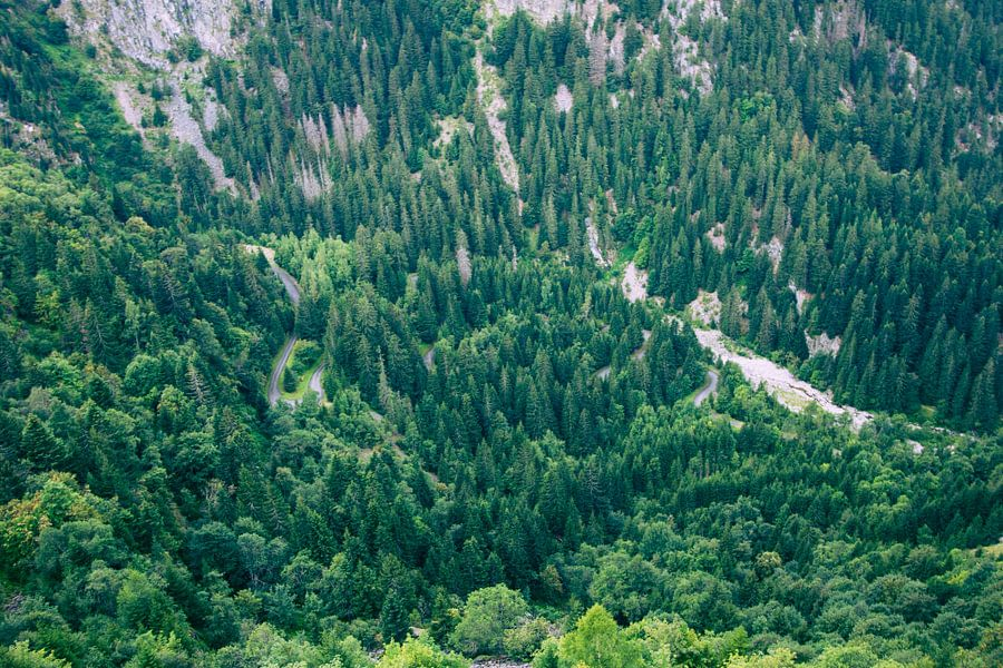 Franse Alpen Bos  van Sander Monster