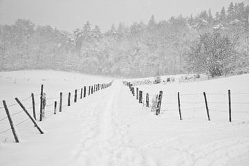Bospad winter von Tess Smethurst-Oostvogel