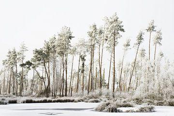 weiße Welt von Petra Terpstra