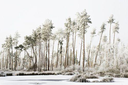 winter wereld van