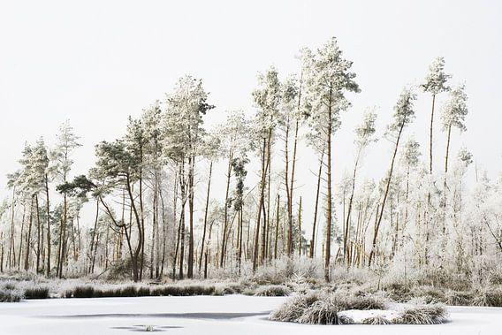 winter wereld van Petra Terpstra