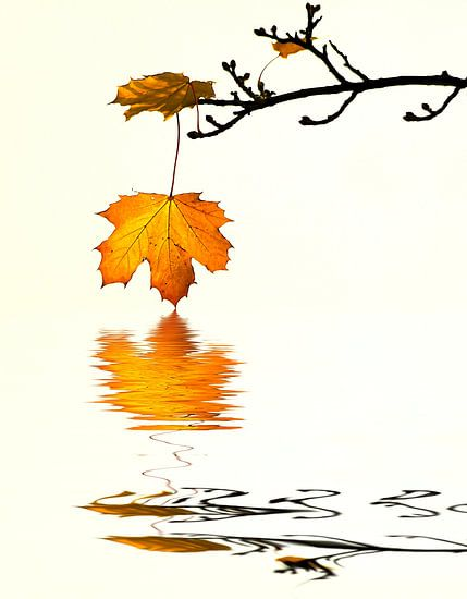 Herfstbladeren van Renate Knapp