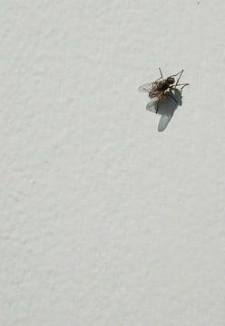 Schmutzige Fliege! von Ellen Voorn