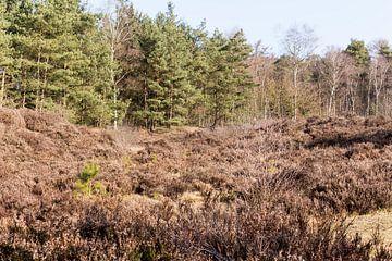 Verscheidenheid aan vegetatie in Lage Vuursche van Jaap Mulder