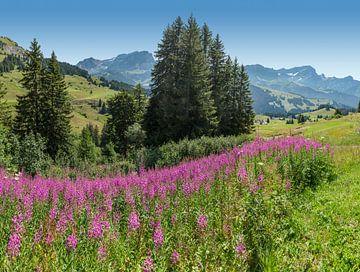 Col de Bretaye, Villars-sur-Ollon, Kanton Waadt, Schweiz von Rene van der Meer
