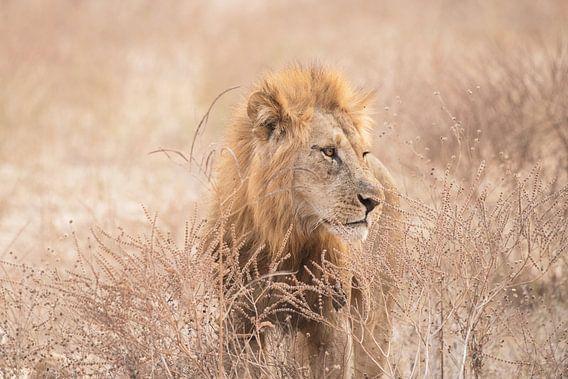 Leeuw. van Francis Dost
