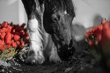 Pferd unter den roten Tulpen von Daliyah BenHaim