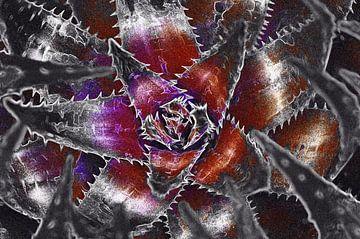 Kaktus in Lila & Rot von De Rover