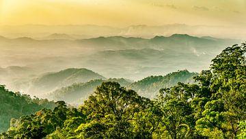 Regenwald mit Nebel auf den Genting highlands in Malaysia von Dieter Walther