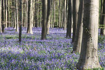 Wald mit Blumen von Ruud Wijnands