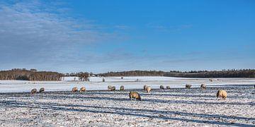 Winterlandschap in Gaasterland winter 2021 van Harrie Muis