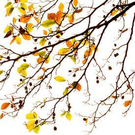 Herfst van Marieke van der Doef