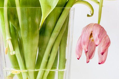 Tulp (hangend)