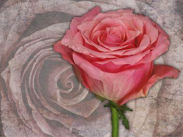 Roos van de voorzijde op marmer van Gilbert Gordijn