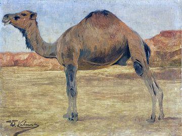 Dromedaris of kameel, WILHELM KUHNERT, Ca. 1885-1890 van Atelier Liesjes
