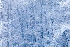 Berijpt bos tussen blauw en wit