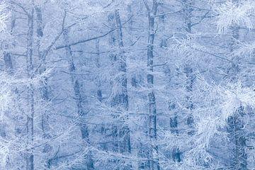 Berijpt bos tussen blauw en wit van Karla Leeftink