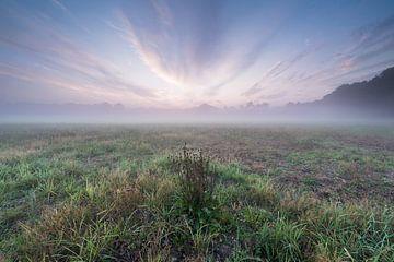 Purple Sky von Davy Sleijster