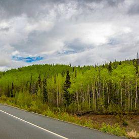 Golden circle route, door Yukon en Alaska van Rietje Bulthuis
