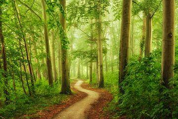 Der Sommerweg von Lars van de Goor