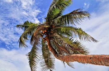 Tropische Palme vor sommerlichem Himmel von MPfoto71
