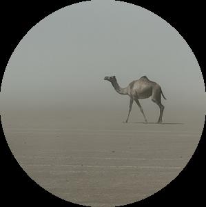 Eenzame kameel in de woestijn in Afrika   Ethiopië van Photolovers reisfotografie